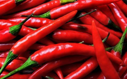 Top 7 World's Hottest Peppers